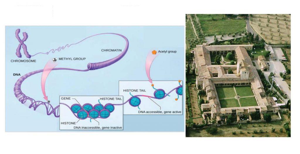 7th Sardinian International Summer School 'From GWAS to function'